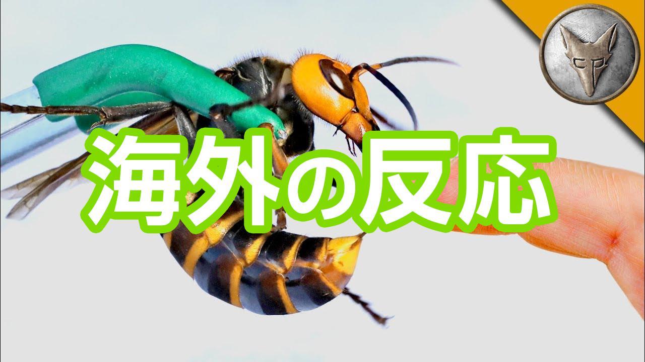 スズメバチ海外の反応